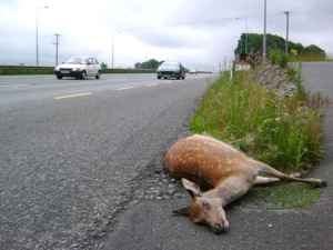 deer_on_road_big